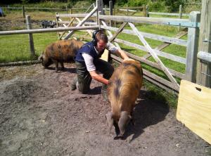 Pig PD