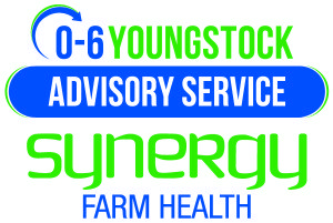 youngstock logo