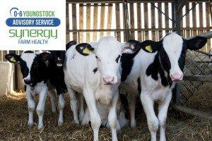 Milk Feeding Calves Workshop, by 0-6 Youngstock Advisory Service @ Synergy Farm Health, West Hill Barns | Evershot | England | United Kingdom