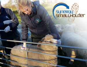Setting Up Your Smallholding @ Lower Coombe